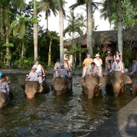 ELEPHANTS-03