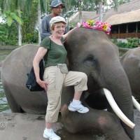 ELEPHANTS-08